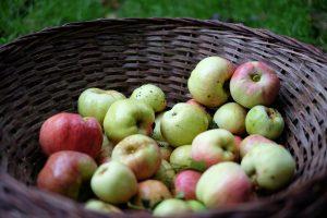 Apfelernte und Erntefest